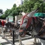 les ânes de Mijas