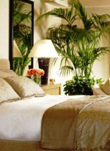 chambre tropicale lit et plante